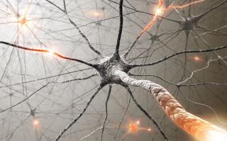 nerves.jpg - 21.43 kB